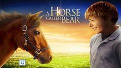 Best Family Movies 2020 The Magic Horse Adventure Movies in English (fast makers daily )
