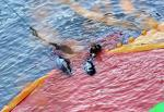 Japans Notorious Taiji Dolphin Hunt
