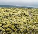 The Mossy Lava Fields of Iceland