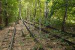 A Nature Park in an Abandoned Railway Yard in Berlin