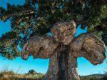 European Trees With The Most Interesting Stories