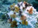 The Christmas Tree Worm