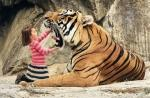 "say ""aaahhh"" big tiger"