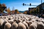 The Trailing of the Sheep Festival
