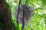 City Crows Build Nests Out of Coat Hangers